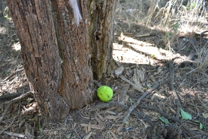 A hedge apple. My sisters and I used to play dodge ball with them. Seriously.